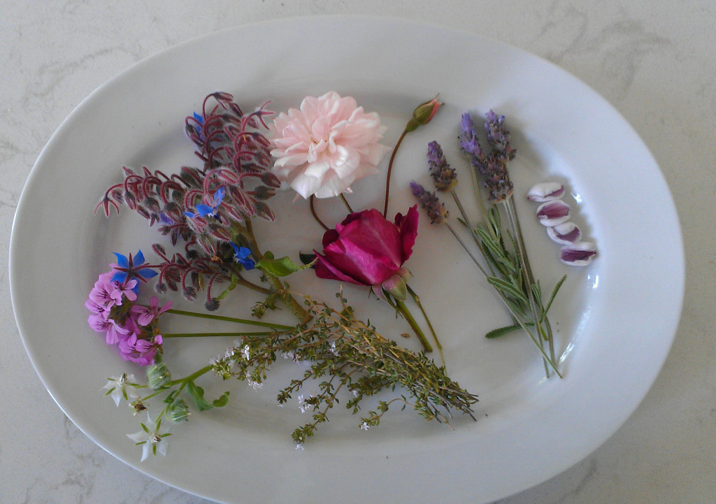Edible flowers are not only a tasty and eye-catching addition to any meal, they have health-promoting benefits as well. Use them as garnishes and in drinks, salads, deserts, and entrées. From left to right: white borage, rose geranium, blue borage, thyme, rose, lavender, and pineapple guava flower petals. Photo © Karen Peltier