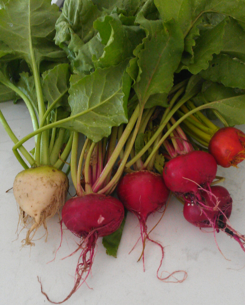 A beautiful assortment of colorful beets straight from the garden.