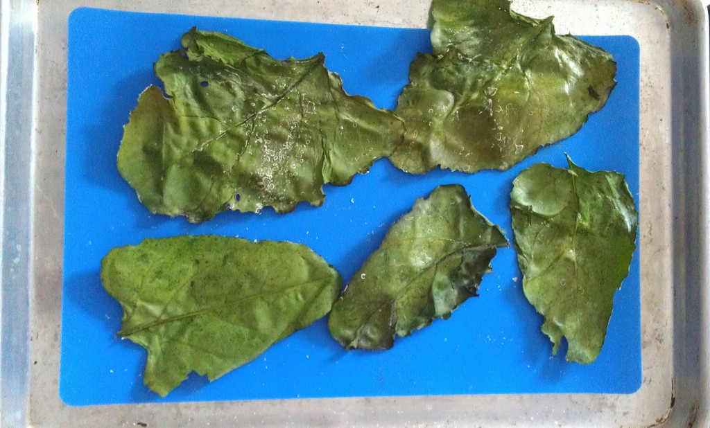 This is how the roasted beet leaf chips look when they are done -- nice and crispy.